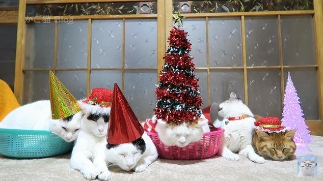 帽子をかじる右から2番目の猫
