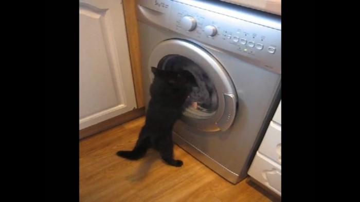 再びパンチする猫