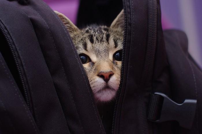 バッグの中に隠れる猫