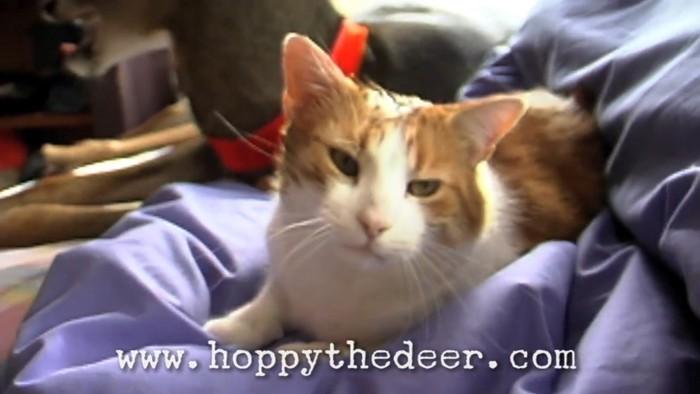 ヘアーが乱れる猫