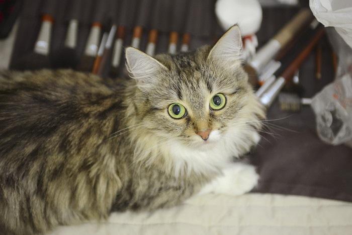メイクブラシを持った猫