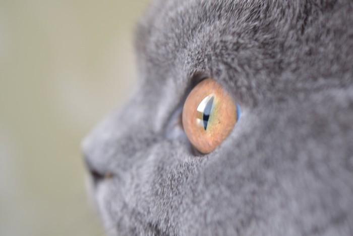 グレーの猫の横顔アップ