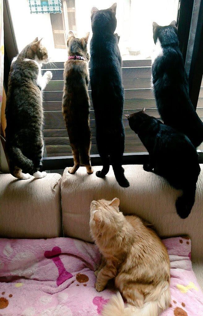 窓から外を見る猫たち