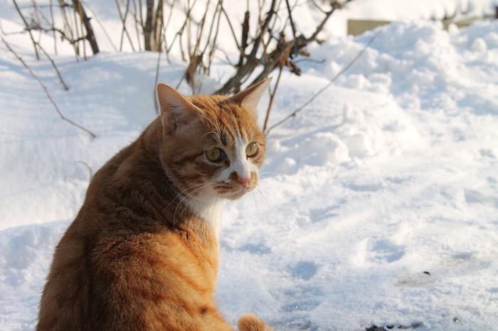 雪の中にいる野良猫