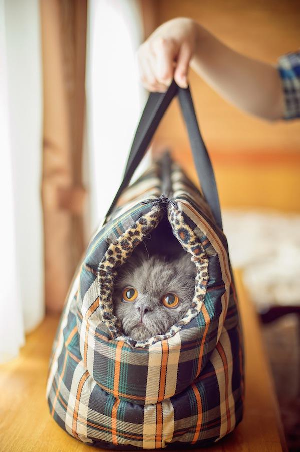 手提げバックの中の猫