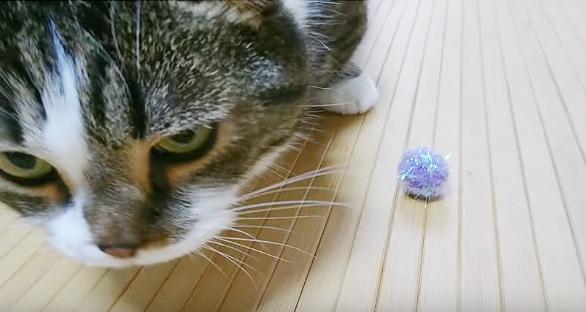 おもちゃのボールを口から出した猫