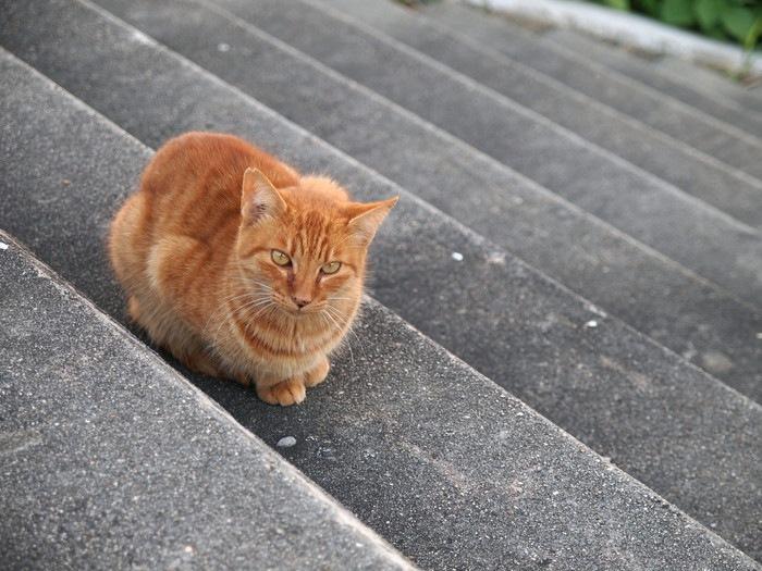 階段の上で休む猫