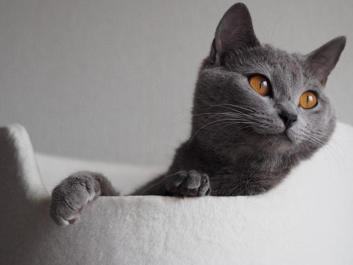 ベッドで寛ぐ猫の写真