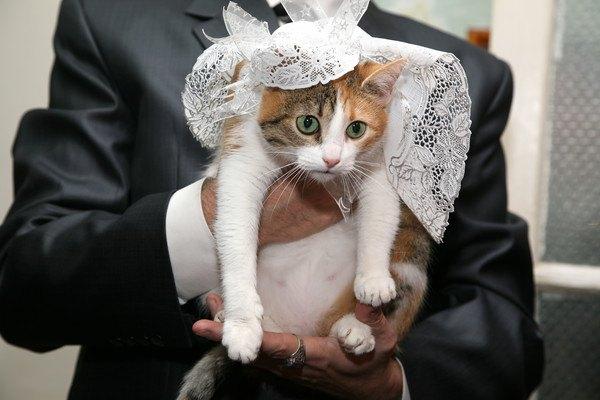着飾って抱っこされる猫