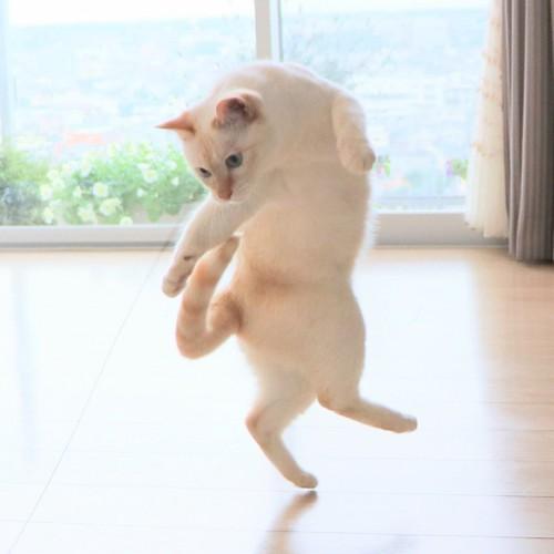 踊るチャコちゃん10