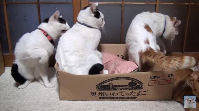 左端の猫、右前脚を上げて隣の猫を甘噛み