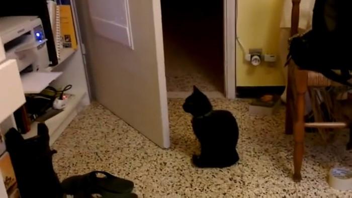 プリンターを見る猫