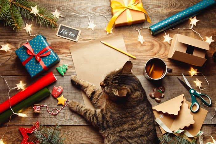 ギフトボックスと猫