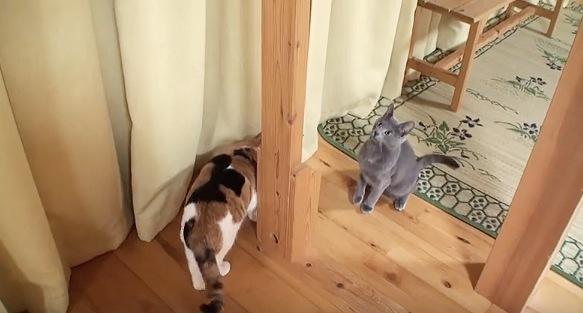 隠れに行く猫