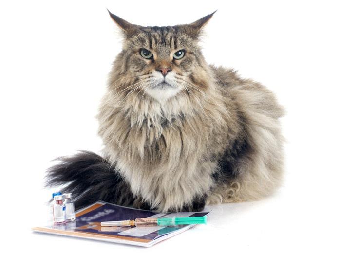 注射器と座る猫の写真