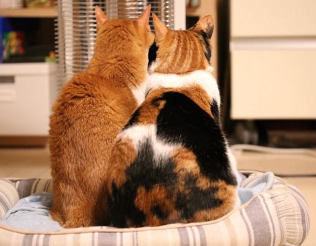 後ろ姿の猫2匹