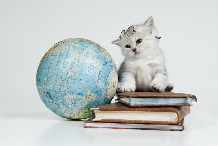 地球儀と本と眼鏡をかけた子猫