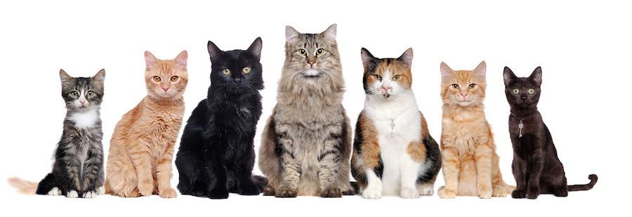 短毛長毛さまざまな猫たち
