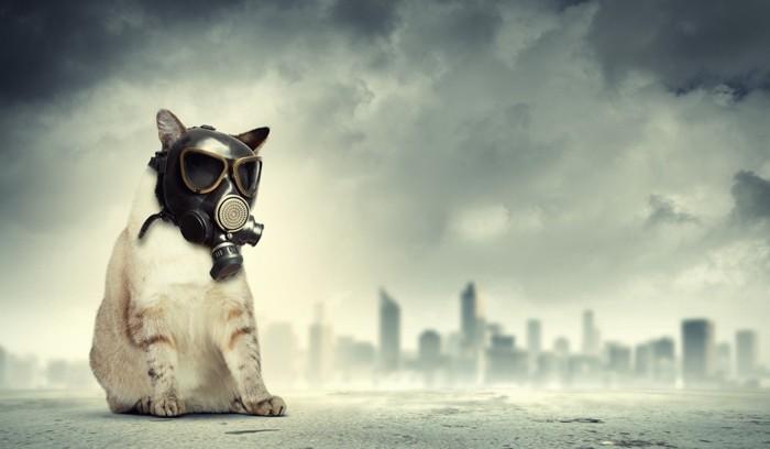 ガスマスクをする猫