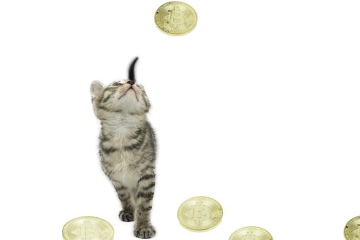 ビットコインと猫