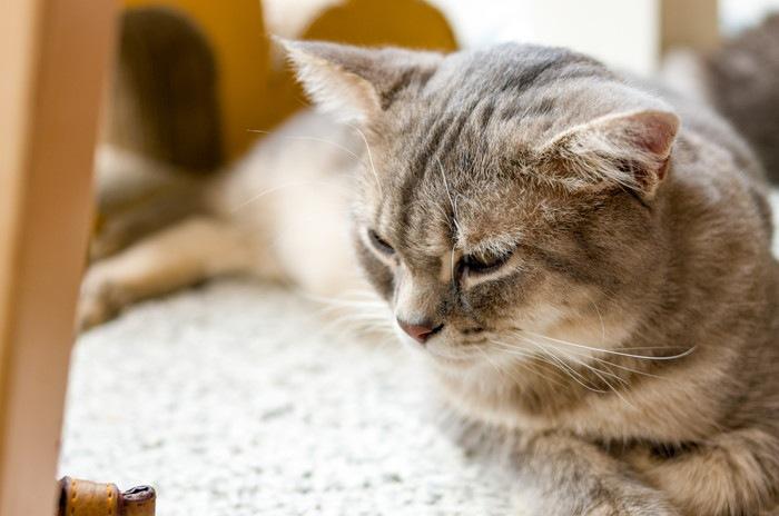 眠たそうにする猫