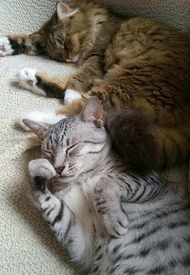 他の猫とも仲良し