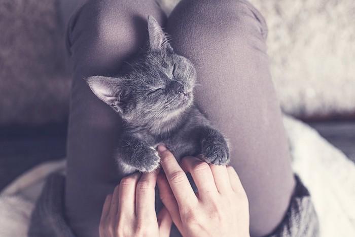 飼い主の膝の上で気持ちよさそうに眠る猫