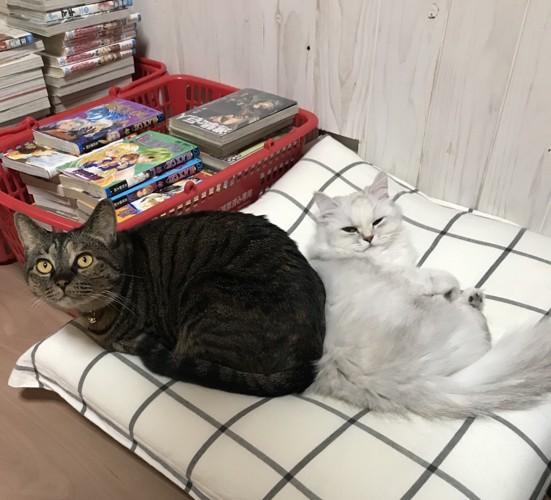 メロンと後輩猫ミルク