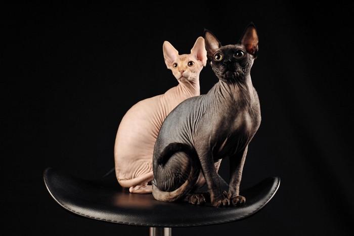 椅子の上に座る白いスフィンクスと黒いスフィンクス
