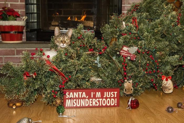 クリスマスツリーを倒した猫