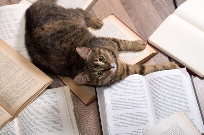 たくさんの本と猫