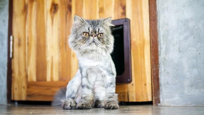 ドアの前に座っている猫