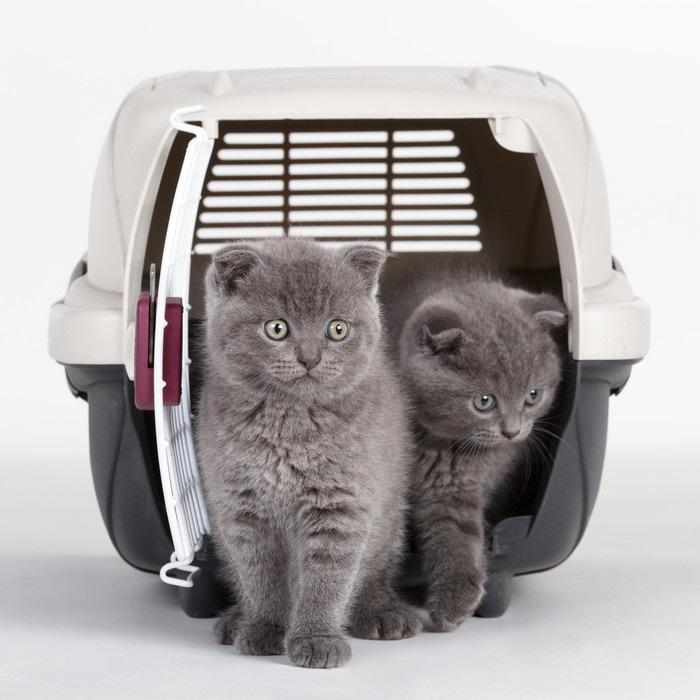 二匹の猫とケージ