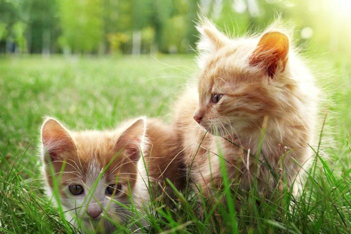 草むらにいる2匹の子猫