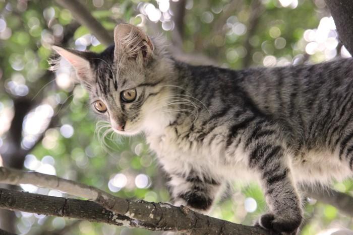 木の上のサバトラ