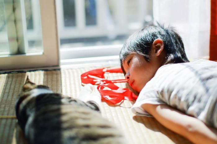 一緒に寝る猫と女の子