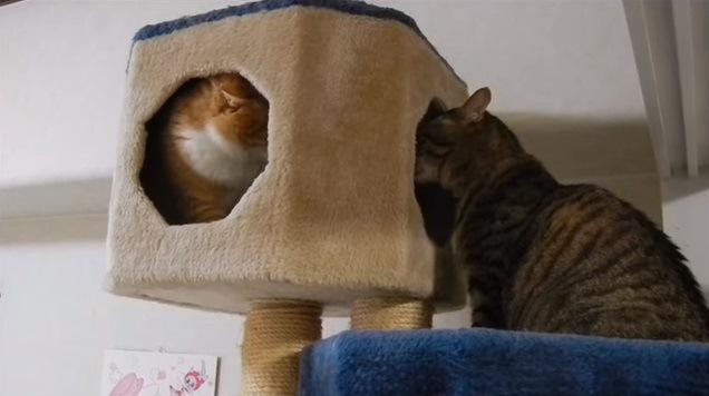 睨み合う猫達