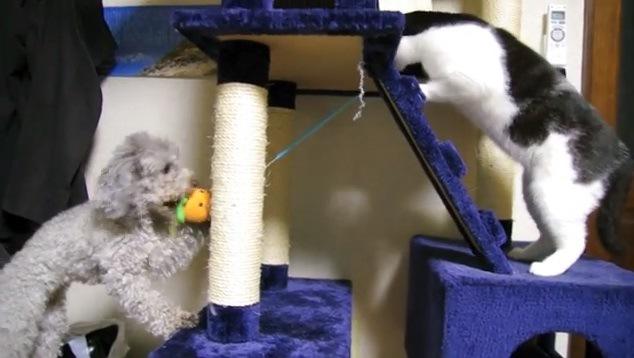 ニンジンを引っ張る犬と立ち上がる猫