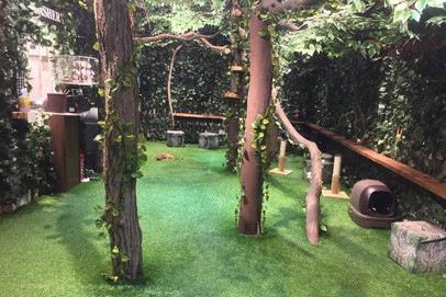 ヒョウ猫の森