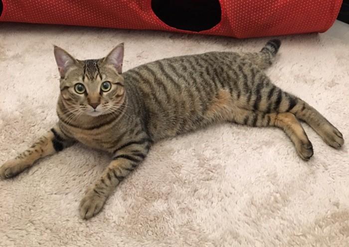 成猫になってからの猫の写真