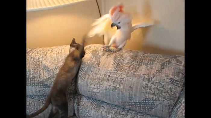 いきなり猫パンチ