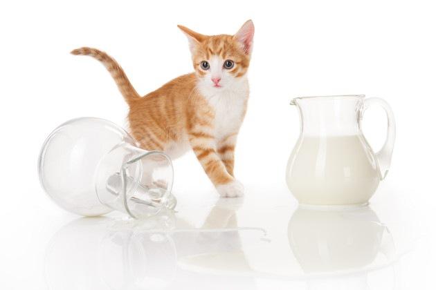 ミルク瓶と猫