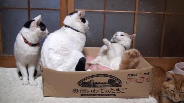 にらみ合う2匹の猫とそれを見つめる猫