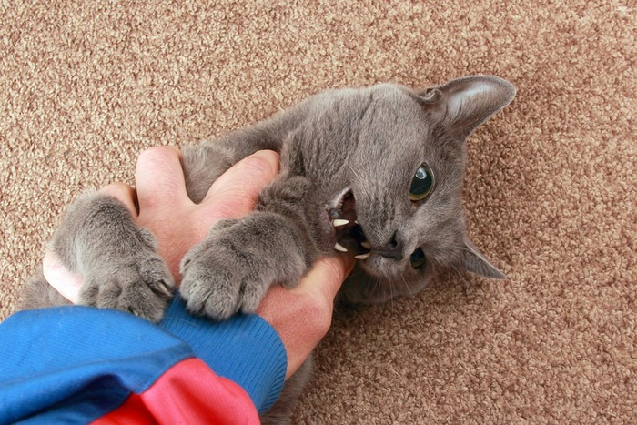 痛いくらい噛んでいる猫