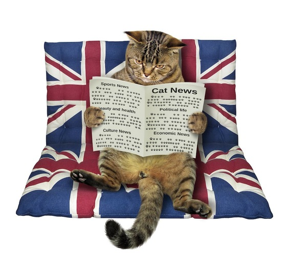 イギリスの国旗の柄のクッションに乗って本を読む猫
