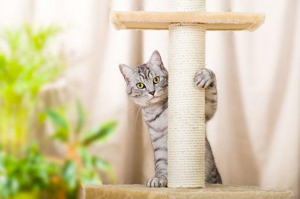 キャットタワーにしがみつく猫