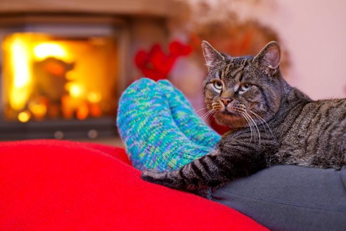 脚の上にいる猫