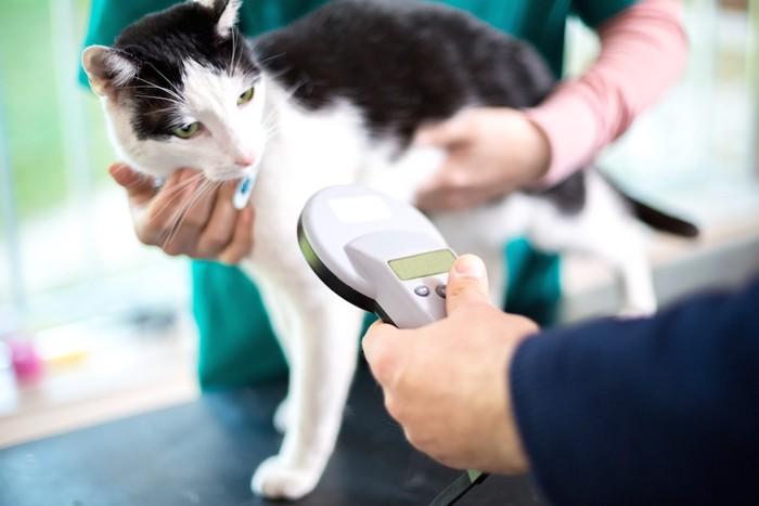 猫のマイクロチップを読みとる獣医師