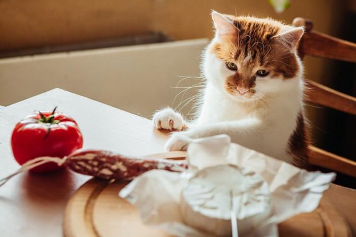 テーブルの上のチーズを見ている猫