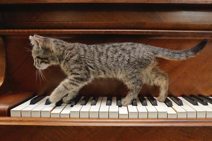 ピアノの鍵盤の上を歩く子猫